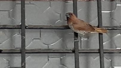 a bird sitting on window