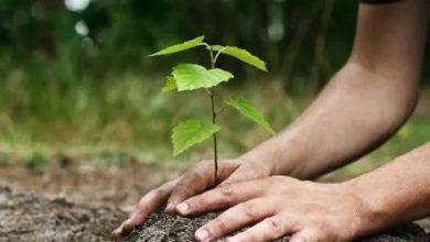 Photo of स्वप्न के इको रेंजर्स ने किया वृक्षारोपण