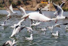 Photo of प्रयाग संगम पर विदेशी पक्षी