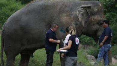 Photo of दुनिया में निपट अकेले हाथी की जिंदगी में फिर से आ जायेगी बहार