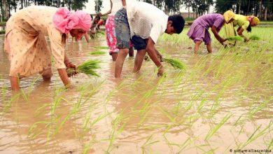 Photo of भारत में खेती किसानी की  सांस्कृतिक वैज्ञानिकता बनाम  व्यापारिक वैज्ञानिकता